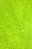 Green Leaf Texture Macro Background Stock Photos