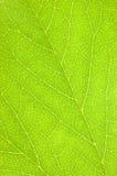 Green Leaf Texture Macro Background stock photos