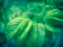 Green leaf texture. Natural background Royalty Free Stock Images