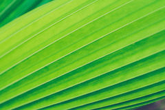 Green leaf  texture nature background Royalty Free Stock Photo