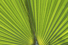 Green Leaf Texture. And  pattern Royalty Free Stock Photos