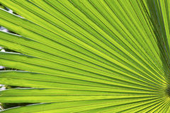 Green Leaf Texture. And pattern royalty free illustration