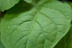 Green leaf texture, selective focus.  Stock Photos