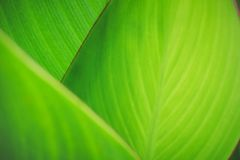 Green leaf texture selective focus nature blur background for ecology concept. Green leaf texture selective focus nature blur background for ecology and stock image