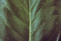 Green Leaf textures and patterns Royalty Free Stock Images