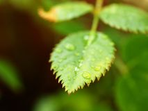 Green leaf with tiny droplets Stock Photo