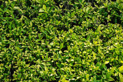 Green Leaf Top View Background Royalty Free Stock Images