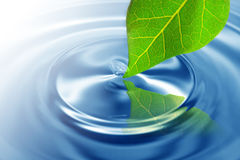 Green leaf touching water. Green leaf touching the rippling water with a small droplet Royalty Free Stock Photography