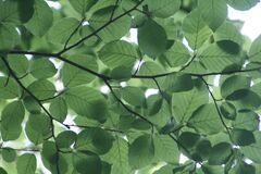 Green Leaf Tree Stock Image