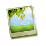 Green leaf on a tree Stock Photos