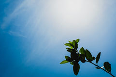 Green leaf tree branch on sunny day background Royalty Free Stock Image