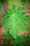 Green leaf of a tree. Close-up. Palm stock image