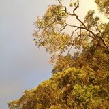 Green Leaf Tree With Cloudy Sky Royalty Free Stock Image