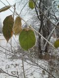A green leaf of a tree covered with ice crystals. Freeze. Frost. Close-up Royalty Free Stock Photos