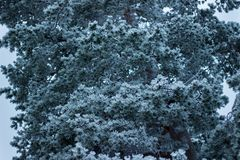 Green Leaf Tree Covered in Snow Stock Photography