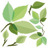green leaf. Of the tree without gradient Stock Photo