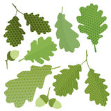 green leaf. Of the tree without gradient, acorn Royalty Free Stock Photo