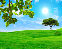 Green leaf and tree in grass field with blue sky Royalty Free Stock Image