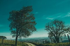 Green Leaf Tree on Side of the Road during Daytime Royalty Free Stock Images