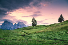 Green Leaf Tree Surrounded by Green Grass Field during Daytim Stock Photography
