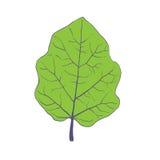 Green leaf of tree, vector illustration Stock Photo