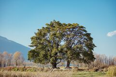 Green Leaf Trees in a Distant of Mountain Under Clear Blue Sky Royalty Free Stock Images