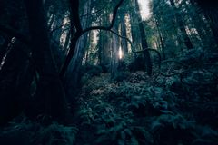 Green Leaf Trees Inside Forest during Daytime Royalty Free Stock Photo