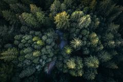 Green, Leaf, Trees, Plants, Nature Stock Image