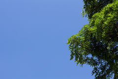 Green leaf under blue sky Royalty Free Stock Photography