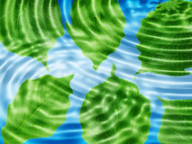 Green leaf under blue water Stock Images
