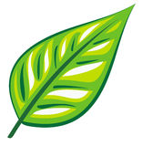 Green leaf (Vector). Vector image – Single green leaf Royalty Free Stock Image