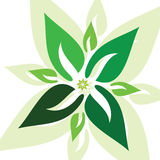 Green leaf vector art illustration Stock Photo