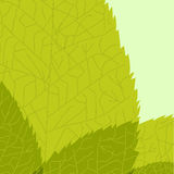 Green leaf. Vector illustration Royalty Free Stock Image