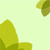 Green leaf. Vector illustration Stock Photography