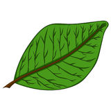 Green leaf. vector illustration. Drawing by hand. Royalty Free Stock Photo