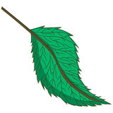 Green leaf. vector illustration. Drawing by hand. Royalty Free Stock Images