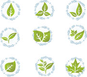 Green leaf vector set. Design elements Stock Photography