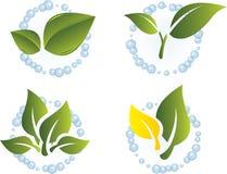 Green leaf vector set. Stock Images