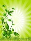 Green, Leaf, Vegetation, Flora Stock Photography