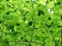 Green, Leaf, Vegetation, Flora Stock Images
