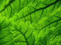 Green, Leaf, Vegetation, Grass Royalty Free Stock Photography