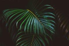 Green, Leaf, Vegetation, Palm Tree Stock Image