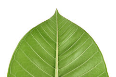 Green leaf view Stock Photography
