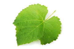 Green leaf vine Royalty Free Stock Photography