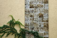 Green leaf vine plant cover brick wall stock photos
