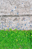 Green leaf wall Stock Images