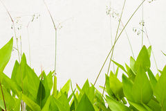 Green leaf wall. Grunge background with tree branches, green leaves stock photo