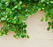 Green leaf and wall pattern Stock Photography
