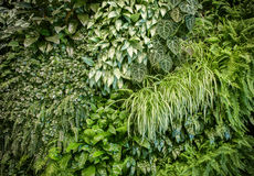 Green leaf wall Royalty Free Stock Photos