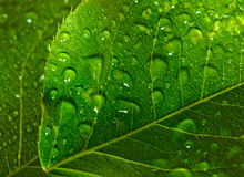 Green leaf with waredrops Stock Image
